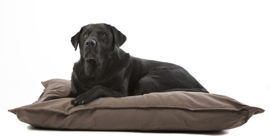 Onze Top 5 Taupe Hondenkussens