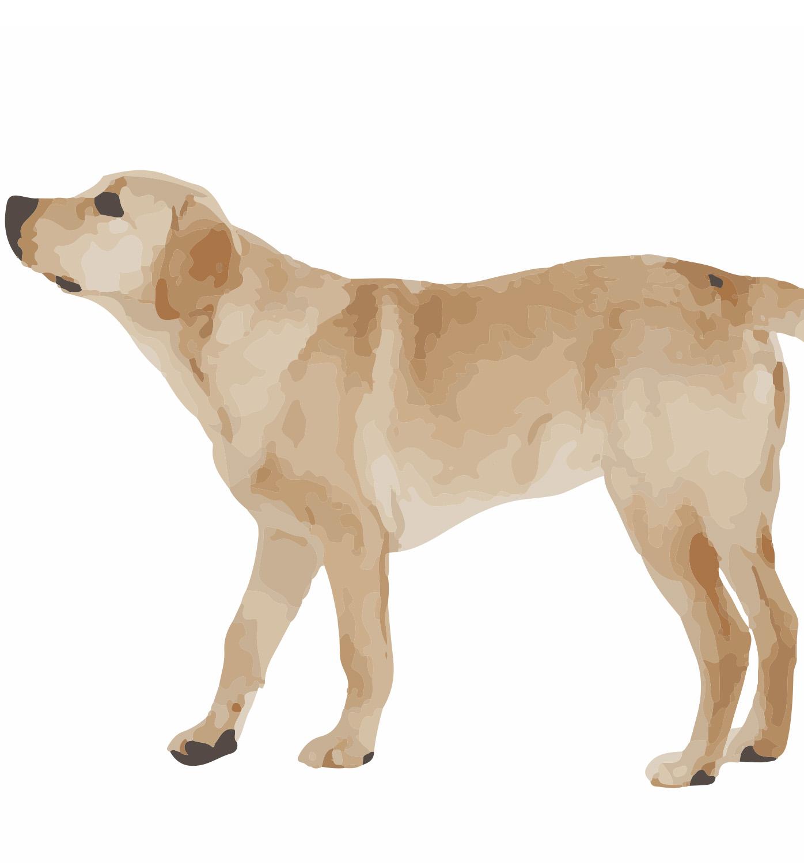 XXL Hondenkussens voor de grote viervoeters